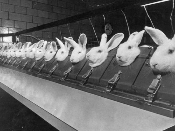 Испытание косметики на животных