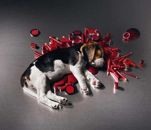 Компании, которые проводят тестирование на животных